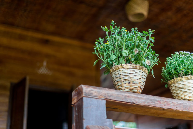 Potted plant in basket on table