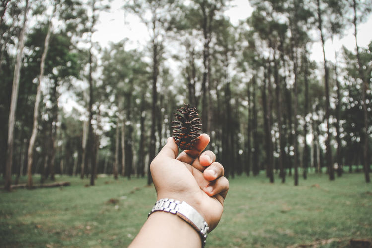 Cropped hand holding pine cone against trees
