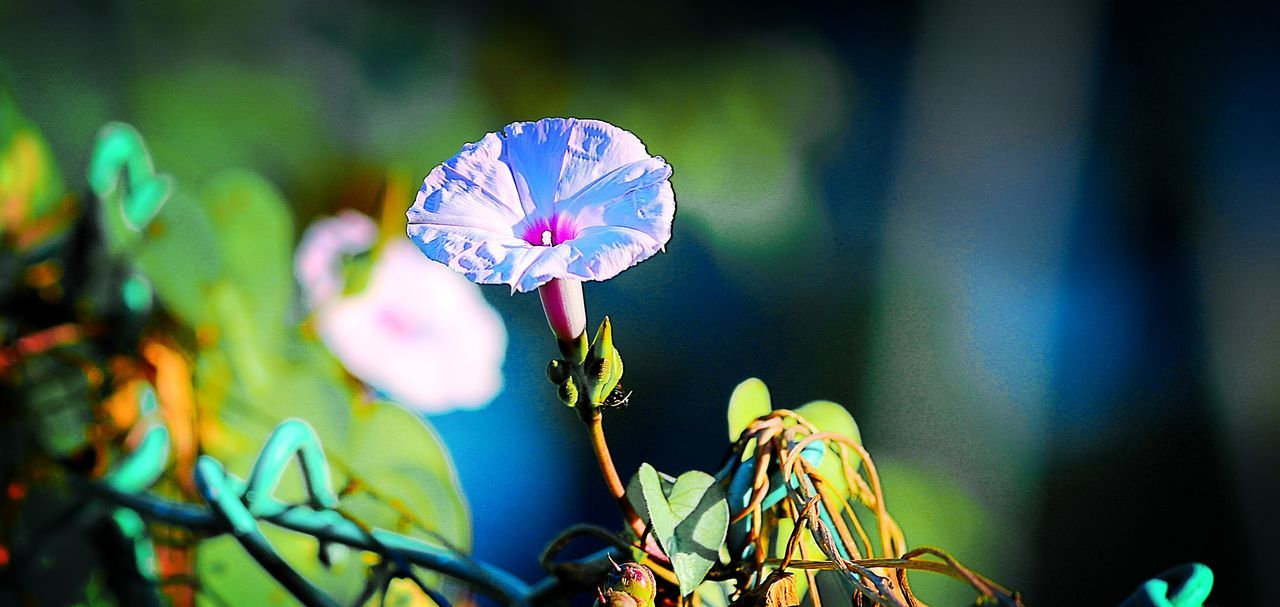 flower, growth, nature, beauty in nature, focus on foreground, day, no people, outdoors, close-up, fragility, plant, flower head, freshness, animal themes