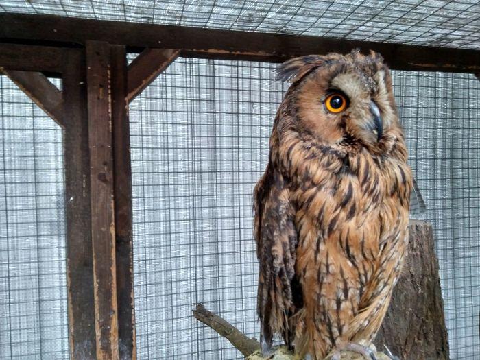 owl EyeEm