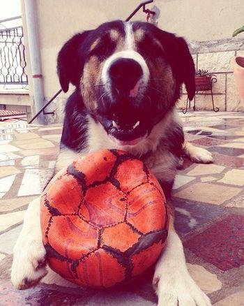 Happy face!!! :) Mydog♡ Myguardianangel Happiness Dogsmiley Love Ball