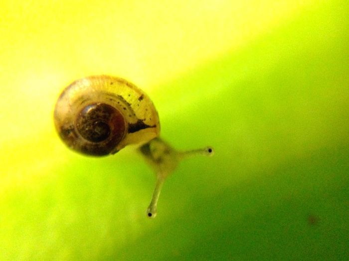 One Animal Animal Themes Green Color Animals In The Wild Close-up Insect No People Nature Yellow Fragility Outdoors Day Gastropod Nofilter