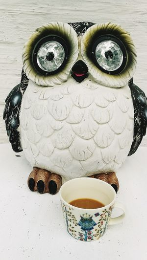 Coffee Time Owl