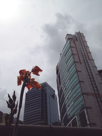 Chance Encounters Building Exterior City Architecture Low Angle View Built Structure Skyscraper Sky Cloud - Sky No People Outdoors Day Flower Flower In The City