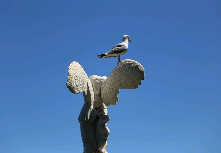 Low angle view of bird perching on statue against blue sky