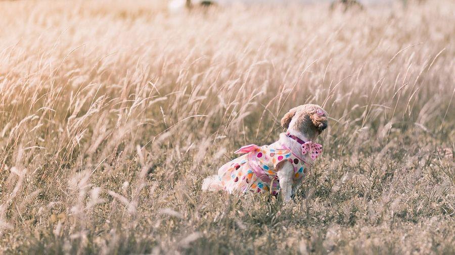 Dog sitting on grassy land