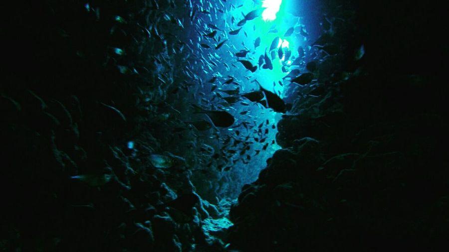 Каньон. Dahab , Dahab Red Sea , Canyon , дахаб Underwater