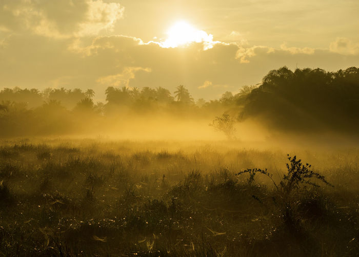 Fog over the grass In the morning Nature along the way in Chumphon Province Sky Tranquility Beauty In Nature Tranquil Scene Plant Sunset Tree Scenics - Nature Fog Idyllic Sun Non-urban Scene Cloud - Sky Land Nature Growth Environment Field No People Outdoors Hazy