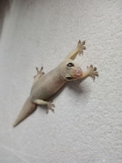 High angle view of lizard on wall