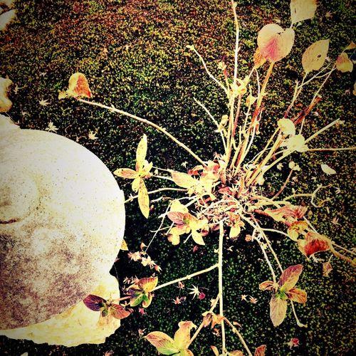 a wintry scene in a garden. 冬枯れの庭 Landscape Garden Temple Flowers Tadaa Community Winteriscoming