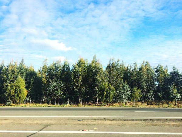 Road Tree Sky Nature