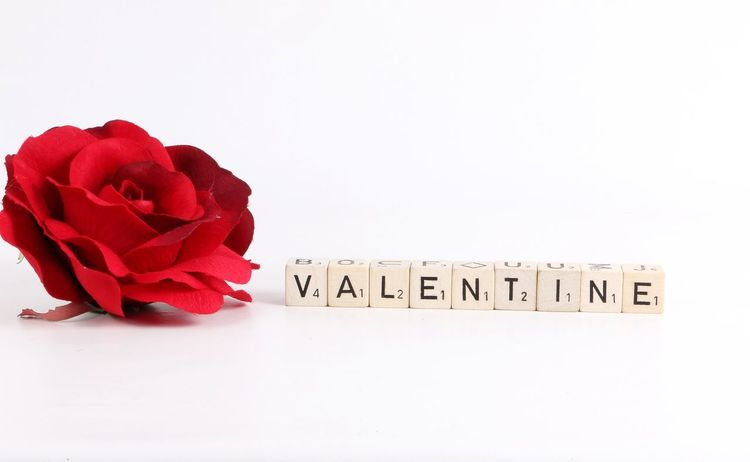 wooden dices in a row named valentine with a red rose Love Romantic Valentine Valentine's Day  Word Alphabet Close-up Decoration Dices Flower Flower Head No People Petal Red Rose - Flower Rose🌹 Row Scrabble Studio Shot Text Valentines Day Valentinesday Valentinstag White Background