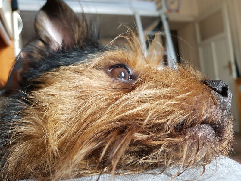 Pets Dog Lover Close-up Beautiful Animals  EyeEm Animal Lover Dog Sleeping