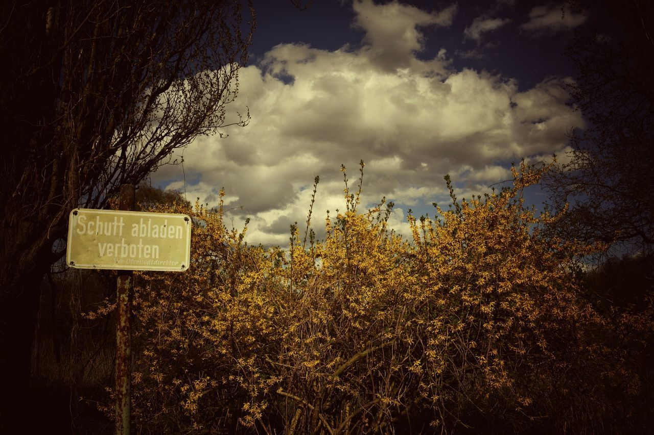 communication, text, western script, cloud - sky, sky, tree, no people, guidance, outdoors, day, road sign, signboard, nature, beauty in nature, close-up