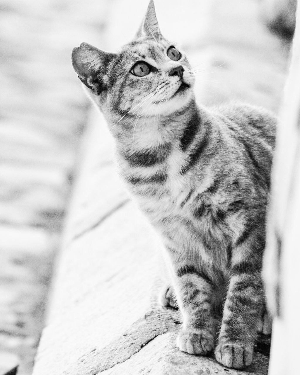 one animal, mammal, domestic cat, cat, feline, pets, domestic animals, vertebrate, domestic, no people, looking, sitting, focus on foreground, day, whisker, looking away, selective focus