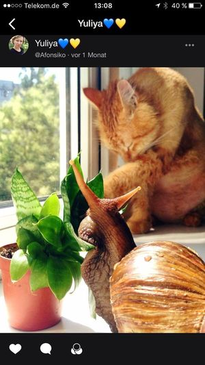 Snail Photography Snail🐌 Cat Licking Himself Katzenwäsche Snail Collection Not From Me From My Eyes To Yours