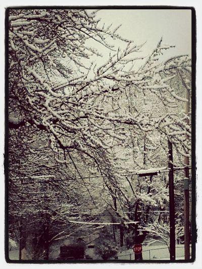 winter wonderland Snow