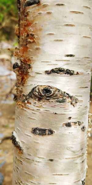 Close-up of dead fish on tree trunk