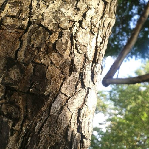 tree eyes Wood Tree Textured  Nature No People Sky Wood - Material Tree Trunk Low Angle View Day Growth Rough Bark