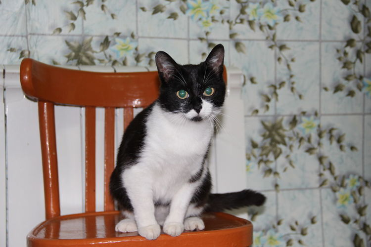 Portrait of cat sitting on seat