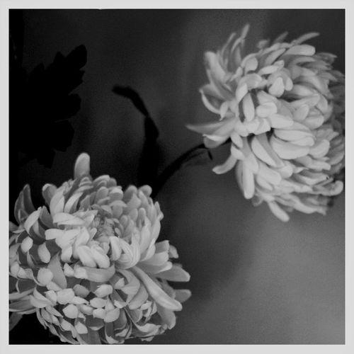 flowers Stillife