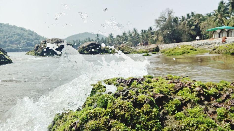 #gokarna Plant Nature Day First Eyeem Photo