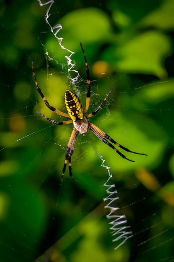 High Angle View Of Spider On Web At Vegetable Garden