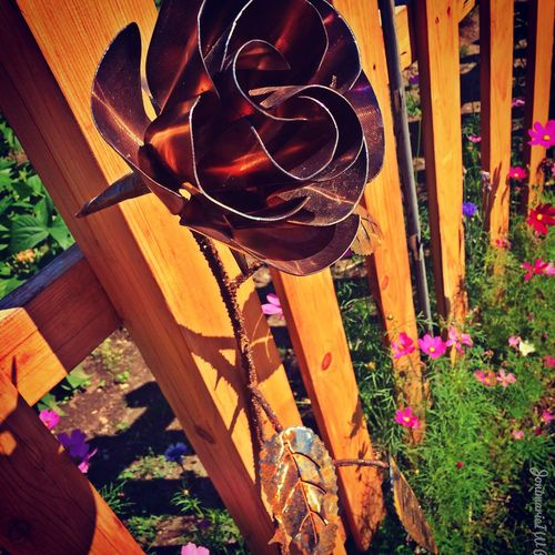 Eternal rose will never die ... What Does Peace Look Like To You? Random Reflections
