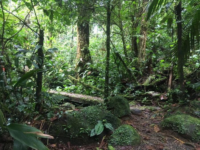 Bridge Trail Light Costa Rica Exploring Forest Adventure Growth Nature Tree Forest Green Color Day Outdoors Beauty In Nature Tree Trunk Plant Tranquility No People Bamboo - Plant Branch