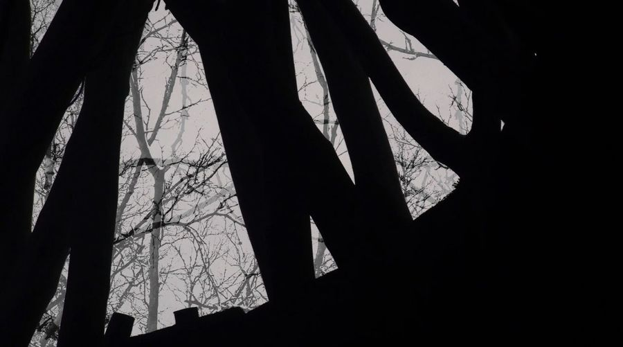Sapmi Pattern Art Photography Experimental Photography Sapmi Vaja Productions Documentary Film Liselotte Wajstedt Dark Outline Sky No People Trees Nakedtree Art Sami Sapmi Non-urban Scene Bare Tree Forest Nature Goahti Lavvu Reahpen