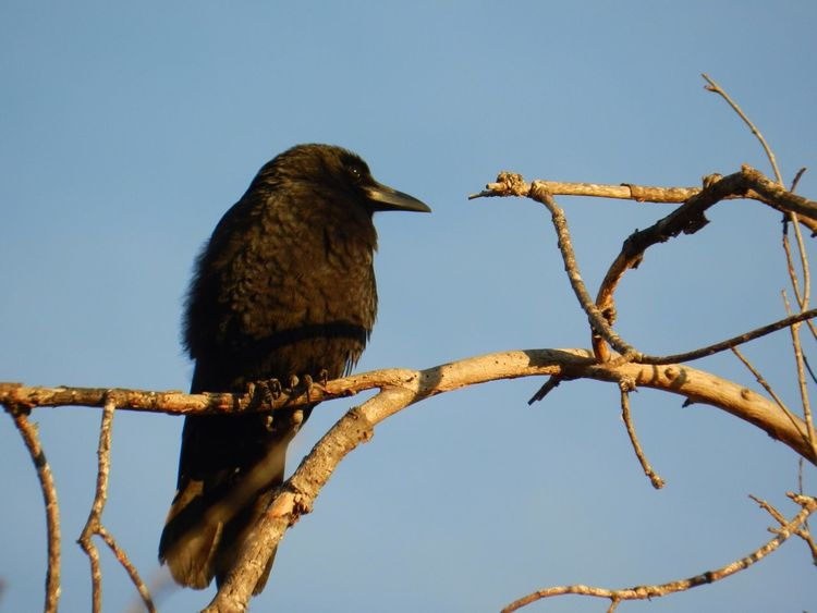 Black bird checking things out. Bird Photography Bird Watching Black Bird