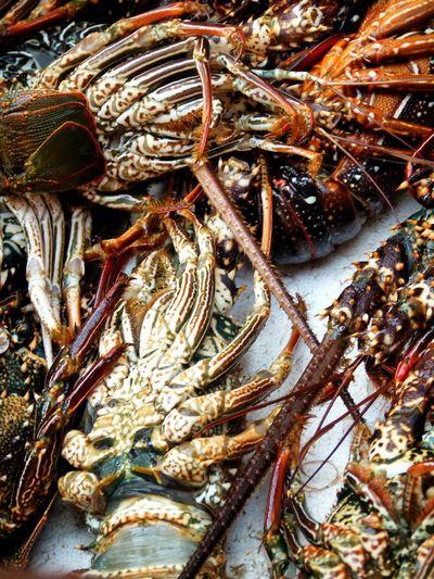 Crayfish Fresh Seefood On The Table No People Fishing