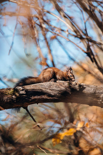www.facebook.com/pelephotography www.instagram.compontosanpele Animal Animal Wildlife Animals In The Wild Animal Themes One Animal Outdoors Selective Focus Squirrel Transylvania