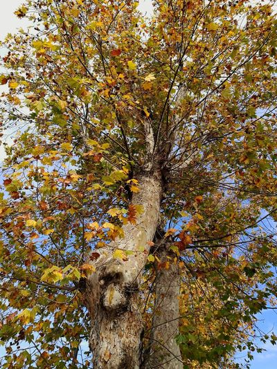 Full Frame Backgrounds Day No People Abstract Low Angle View Outdoors Close-up Tree Nature Sky Beauty In Nature