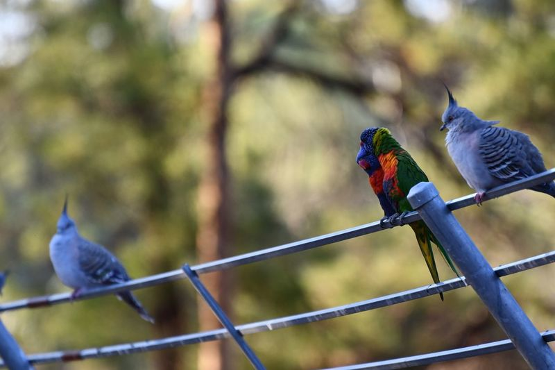 EyeEm Selects Bird Animal Vertebrate Animal Wildlife Animal Themes Animals In The Wild Parrot Fence Boundary Outdoors Nature Barrier No People Day Focus On Foreground Group Of Animals Perching