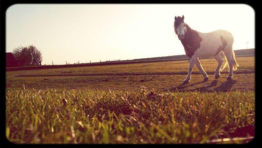 Spetter Horse Netherlands