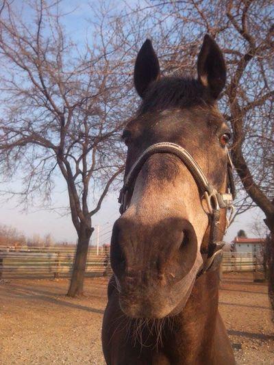 Horse Cavalli Animals