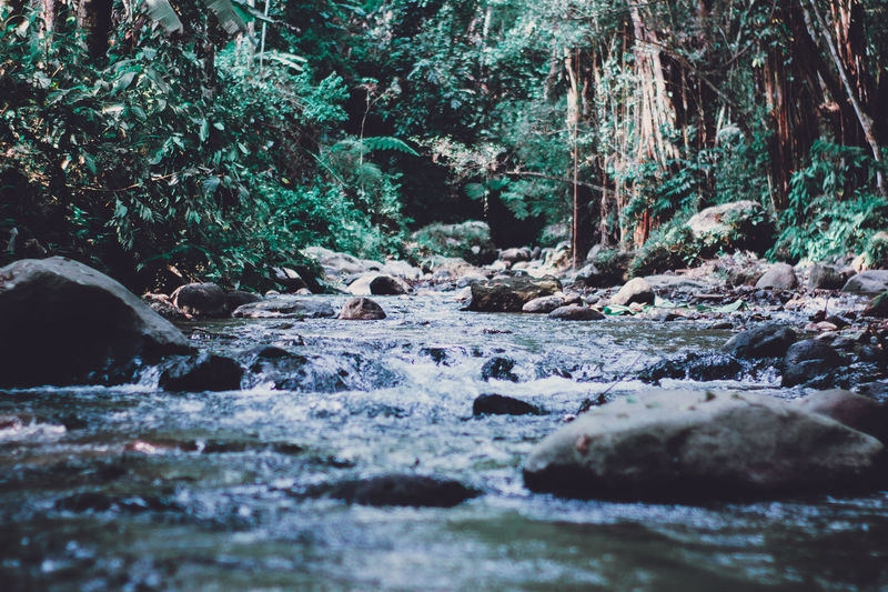 river River Riverside Riverview Nature Water Forest Rock Land Flowing Water Stream - Flowing Water Flowing Stone Beauty In Nature Tree Plant Growth