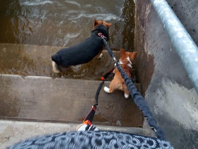 lake drink EyeEm Selects Water Motion Dog