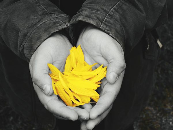 Human Body Part High Angle View One Person One Woman Only Only Women Adults Only Adult Yellow People Human Hand Nature Close-up Freshness Outdoors Young Adult Yellow Flower Yellow Petals Yellow Color Yellow Flowers Paint The Town Yellow Yellow Colour Nature Hands Selective Color Colour Selective