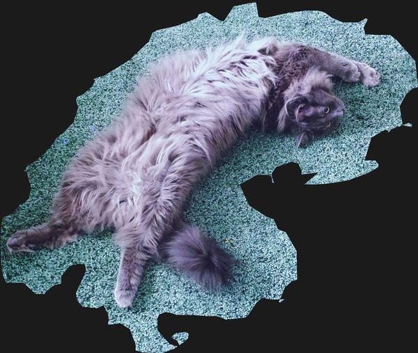 Still cats' life Still Life Photography Cats Fluffy Love Furry Love
