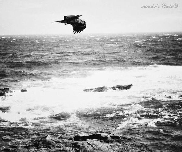 獲物を狙え! Black & White モノクロ Monochromatic View Of The Sea Kite Birds EyeEm Birds Birds In Flight