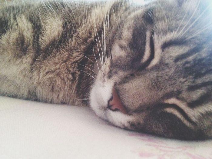 Cute Cat Dream Love