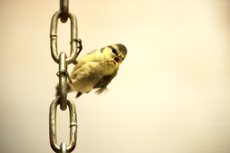 Close-up of bird hanging against blurred background