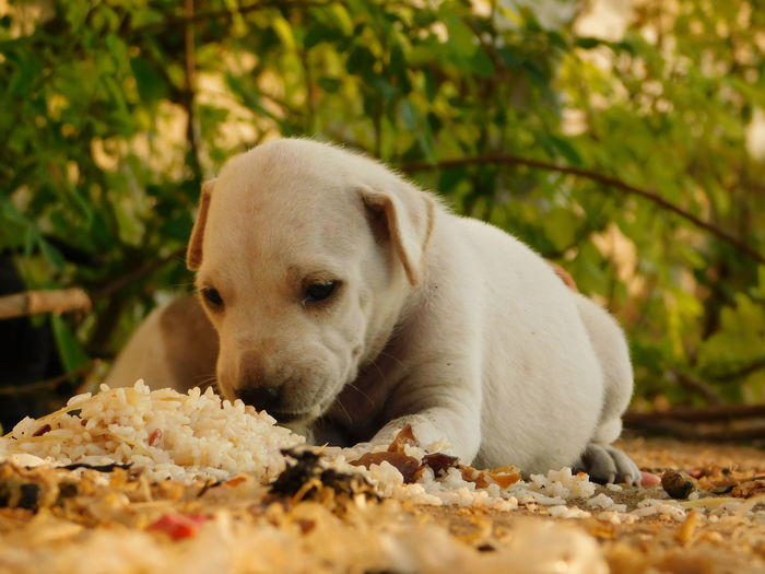 Little Dog Eating its food. Dish Hungry Rice Tree Animal Themes Brown Close-up Cute Day Daylight Dog Domestic Animals Floor Food Mammal No One No People One Animal One Person One Woman Only Outdoors Pets White Yummy