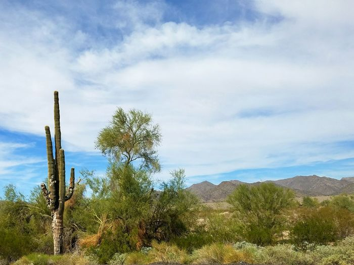Landscape Tranquil Scene Tranquility Sky Cloud Roadside Scenics Mountain Solitude Non-urban Scene Day Blue Outdoors Nature Cactus Arizona Adapted To The City Miles Away