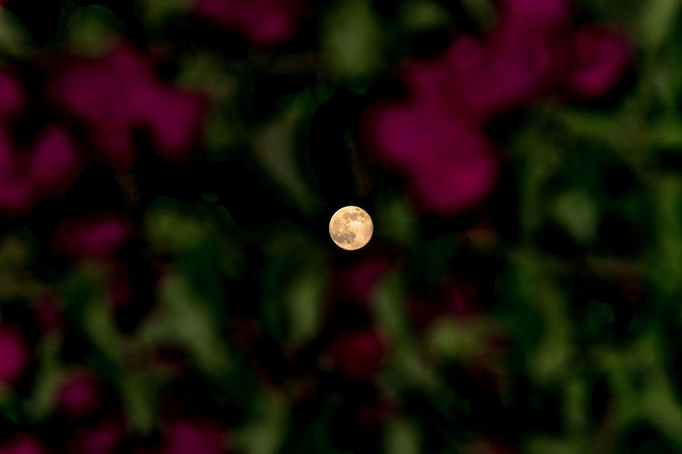Full Moon The Moon & Flowers Beauty In Nature Lunar Moon Nature Night EyeEmNewHere The Week On EyeEm Outdoors Exceptional Photographs EyeEm Best Shots - Nature EyeEm Masterclass EyeEm Best Shots Sky Perspectives On Nature