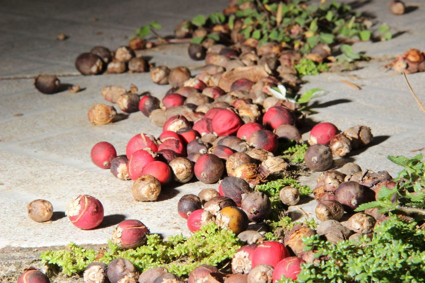 Close-up Large Group Of Objects Little Fruit Multiple Objects