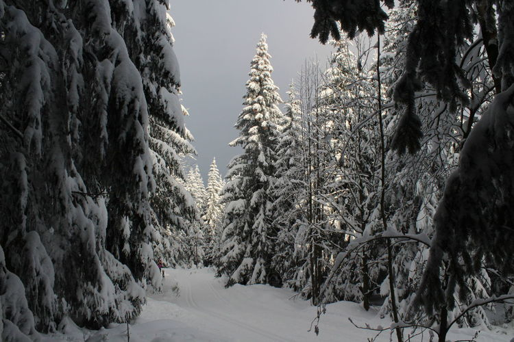 winter impressions of Nationalpark Harz Cold Temperature Snow Winter Nature Harz Brocken Trees Barks Of A Tree Plant Tree Tranquility Beauty In Nature Covering Land No People Tranquil Scene Day Growth Outdoors Environment Field Frozen Scenics - Nature