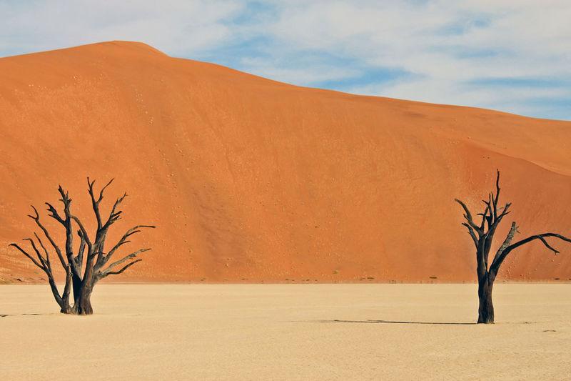 Africa Alone Arid Climate Blue Sky Dessert Desserts Dunes Heat Heat - Temperature Landscape Namibia Nature Outofnowhere Sand Sky Soussesvlei Sun Tree Wildlife & Nature